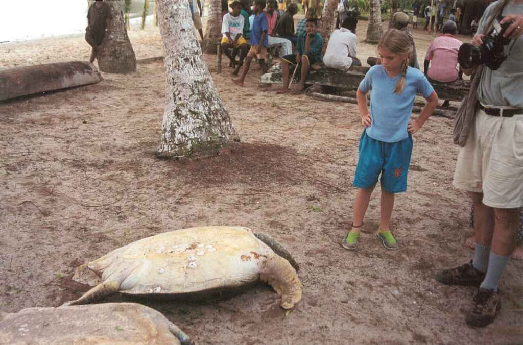 Michael lori johnsons papua new guinea photo gallery endangered species or dinner this turtles captors have no concept of an endangered species list the do however know that you can flip sea turtles on sciox Images